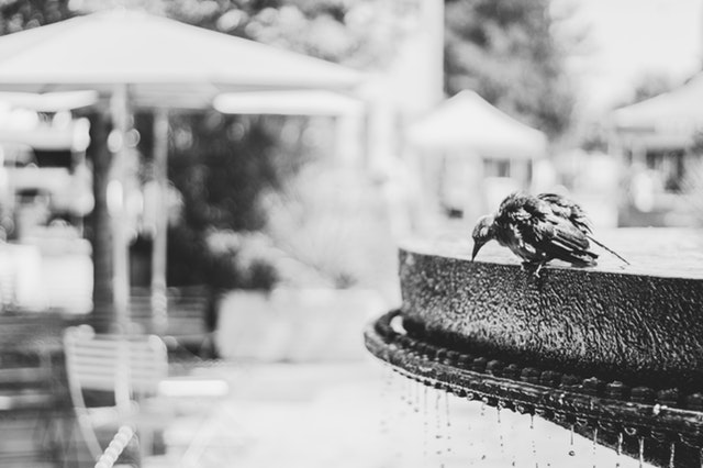 Myths About Bird Baths Connected to Water Tanks NSW