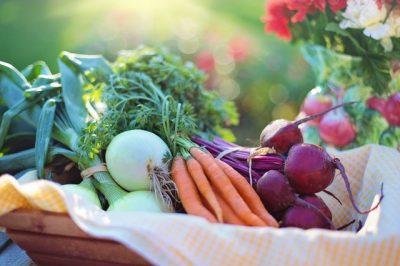 The Best Vegetables for Gardening Beginners