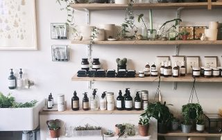 Some of the Toughest Houseplants to Raise