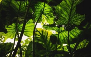 THE APPEAL OF NONFLOWERING PLANTS